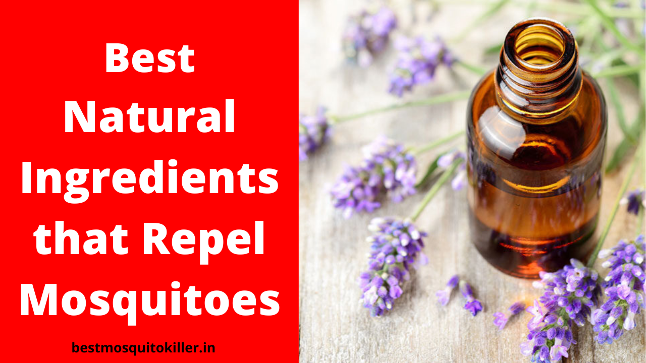 Best Natural Ingredients that Repel Mosquitoes